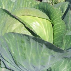 Капуста белокочанная фермерская, 1 кг
