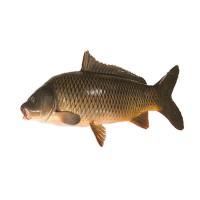 Рыба карп живая, 1 кг